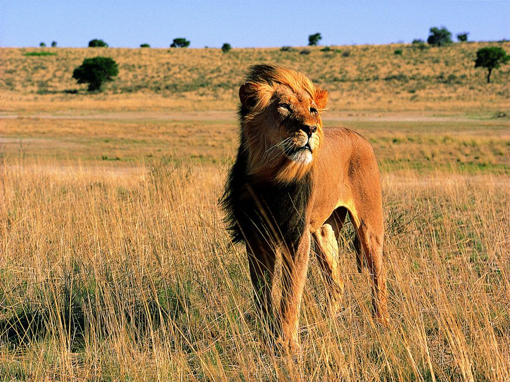 2019南非保护野生动植物亲子活动营